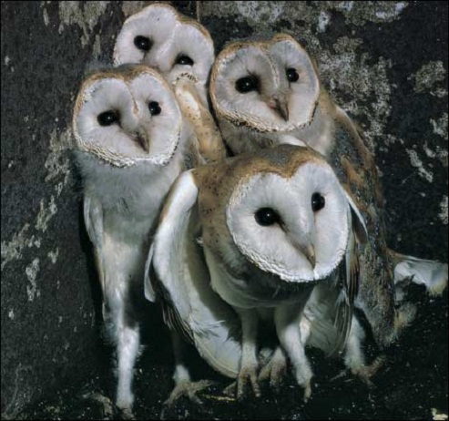 Owls Group 89